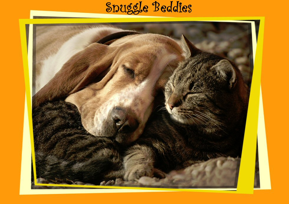Snuggle Beddies